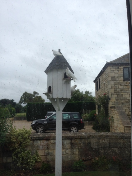 Bradford-on-Avon-Doves