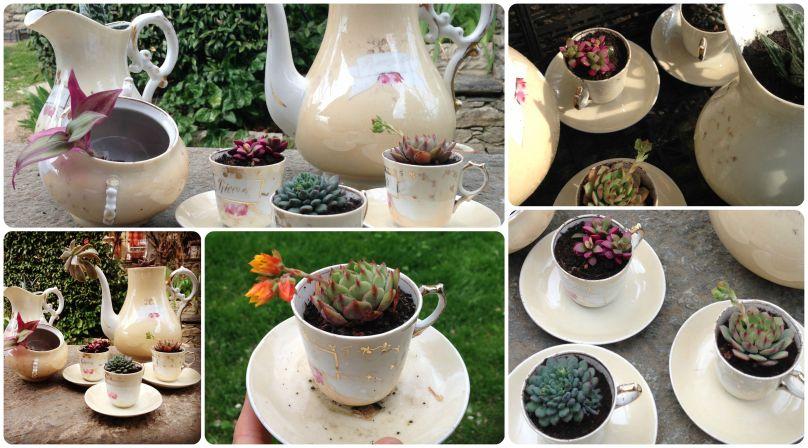 Succulent-TeaTime-Fragulina