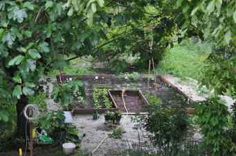 Vegetables garden today