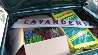 Lavanderia_020